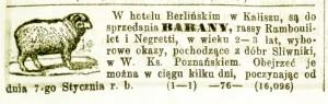 Barany (nr. 3)